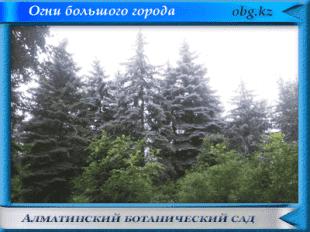 Огни большого города https://obg.kz Алматинский ботанический сад
