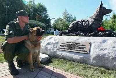 1018375073 400x270 - Боевые собаки Отечественной войны