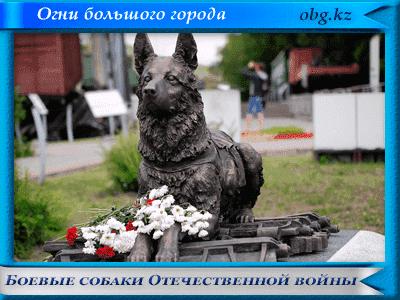 boev sobaki - Денис Давыдов